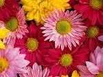 นำดอกไม้สวย ๆ มาฝากกัน
