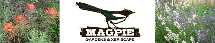 magpie gardens and xeriscapes