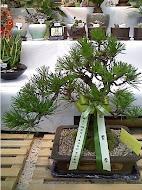 植木(盆栽)