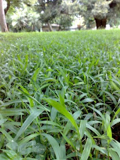 Cures for a Patchy Lawn Family Handyman