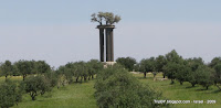 оливковые деревья на столбах (колоннах), TripBY.blogspot.com