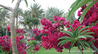 цветы, мертвое море, Израиль, tripby