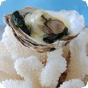 Hutres Chaudes au Muscadet (Poached Oysters with Muscadet Sabayon Sauce)