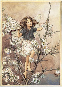 The Blackthorn Fairy