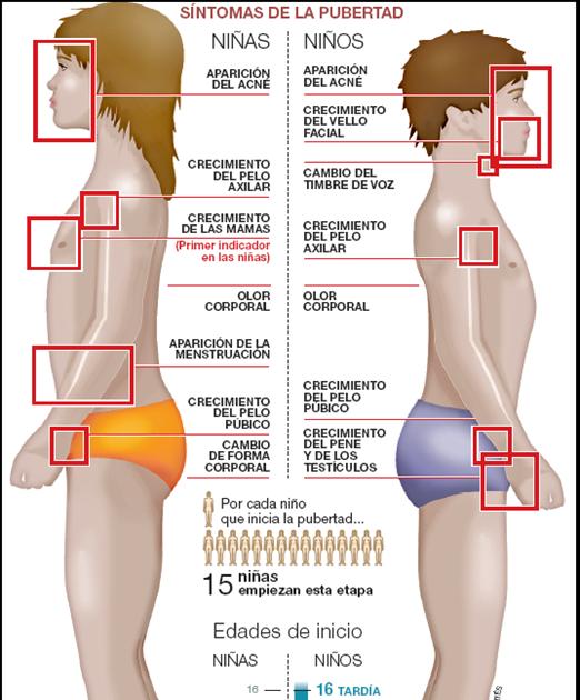 Los ejercicios y el masaje para el aumento del miembro