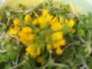 Johnny juice flowering bok choy broccoli sprouts my raab is bright yellow and sure to bust the blues i feel sunshine inside just looking at it in the picture above i placed my meal in a planter box to mightylinksfo