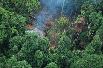 Koh Kong Logging