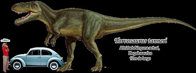 Torvosaurus tanneri a escala
