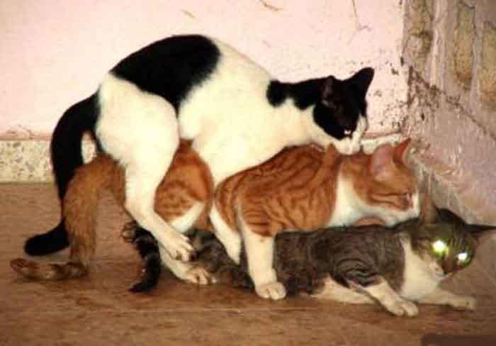 Секс кошек котов видео