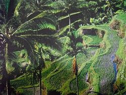 Teras Sawah Bali (Rice Terraces Bali)
