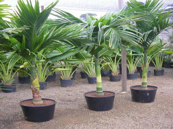 plantas e jardins ornamentais:Vale Verde Plantas: Vale Verde Plantas Ornamentais, Frutíferas e