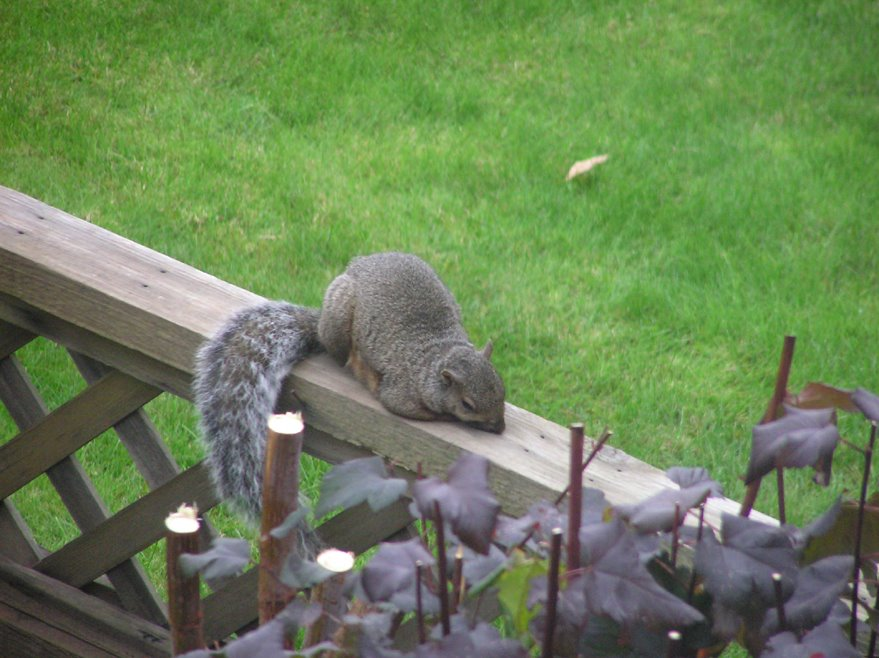 [depressed+squirrel+resize.jpg]
