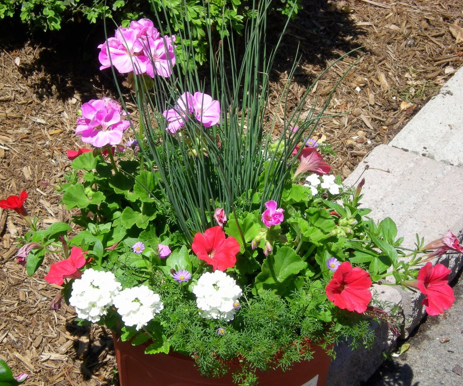 Outdoor Flower Pot Arrangements httpwww.outdoorlivingvirginia