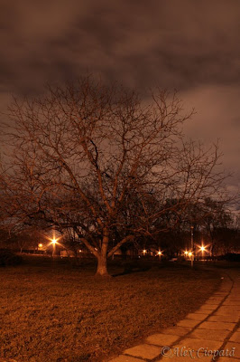 Tree of  the Night