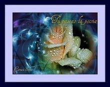 De : Rodar y Volar ........... Para : Poesia Del Cielo