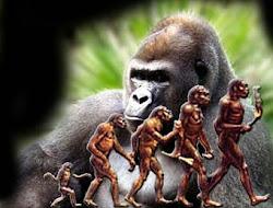 evolucion de la especie