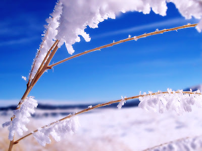 Beautiful Snow HD Wallpaper.