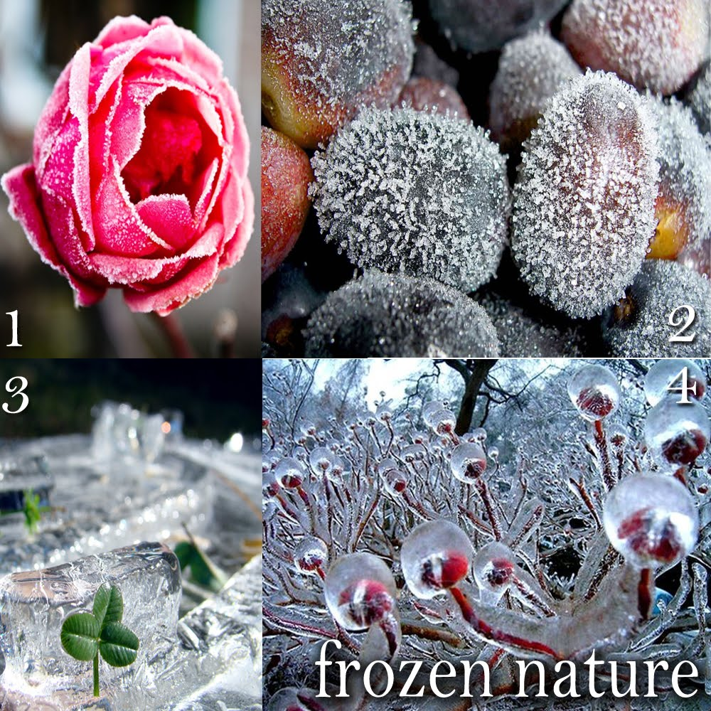 frozen_nature