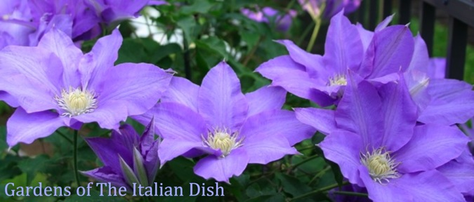 Gardens of The Italian Dish