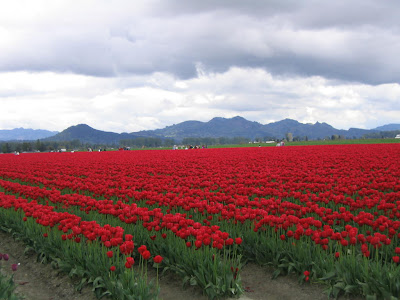 [Tulip+Fields+(16).jpg]