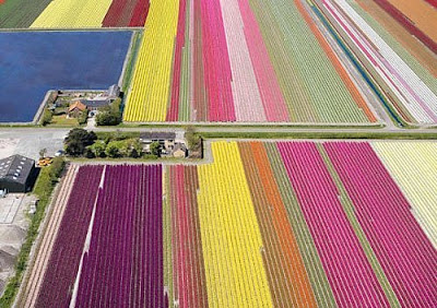 [Tulip+Fields+(4).jpg]