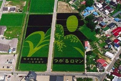 Japanese Rice Field Creative Art Work - AmAzing Photos Seen On www.coolpicturegallery.us