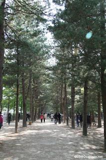 Chuncheon Winter Sonata