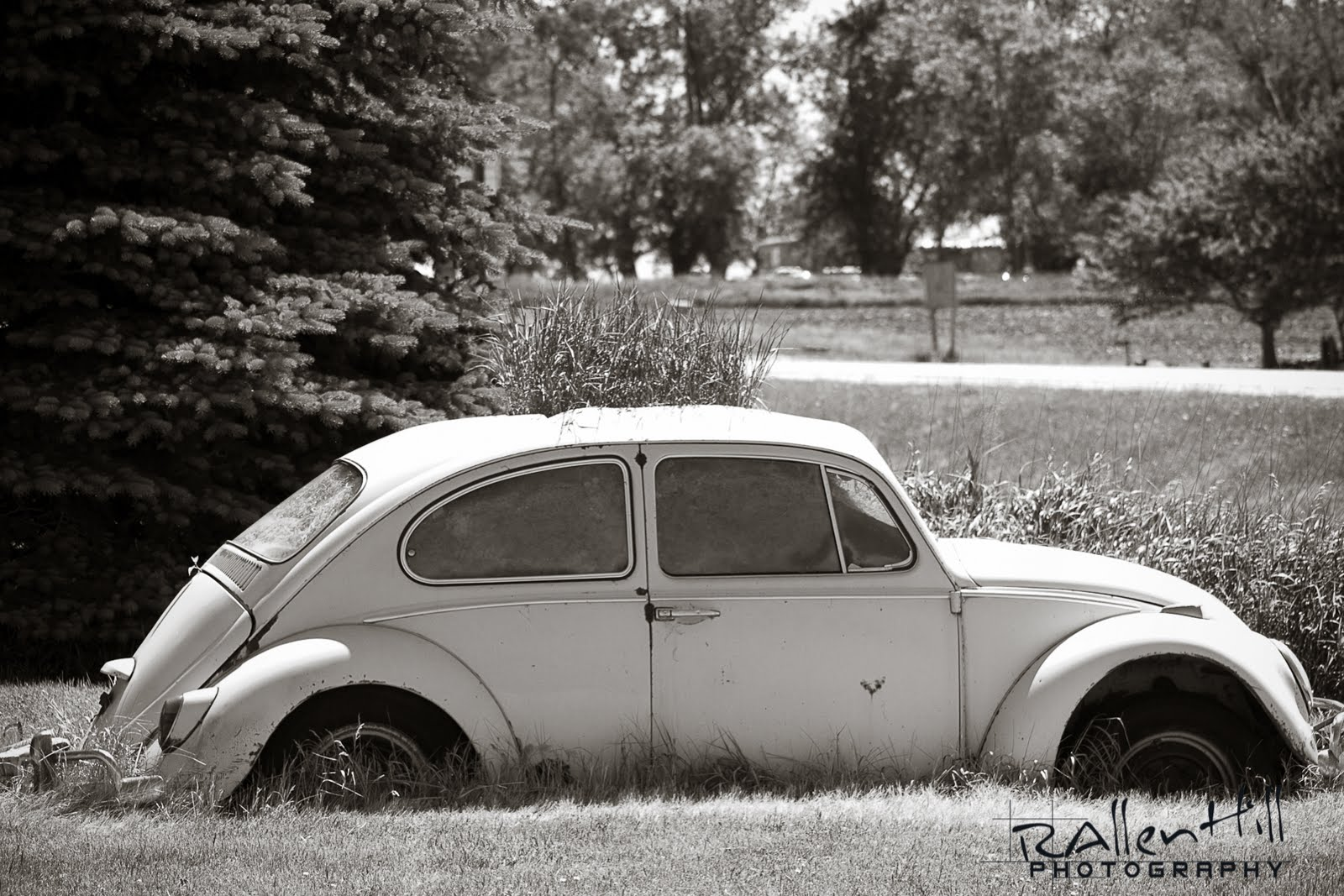 This Old VW has been sitting in this spot for years - and we've been driving