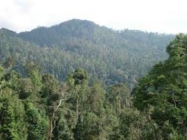 Hutan Simpan