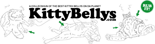KITTY BELLYS