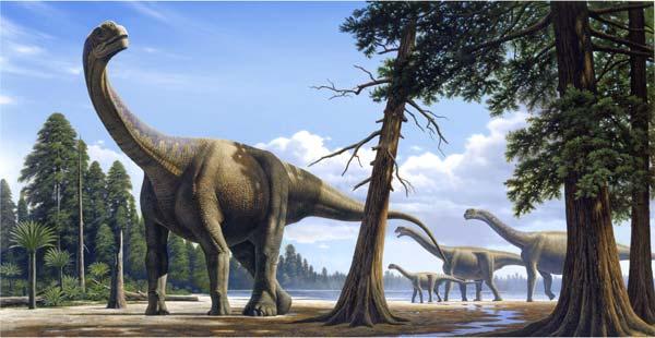 camarasaurus.jpg