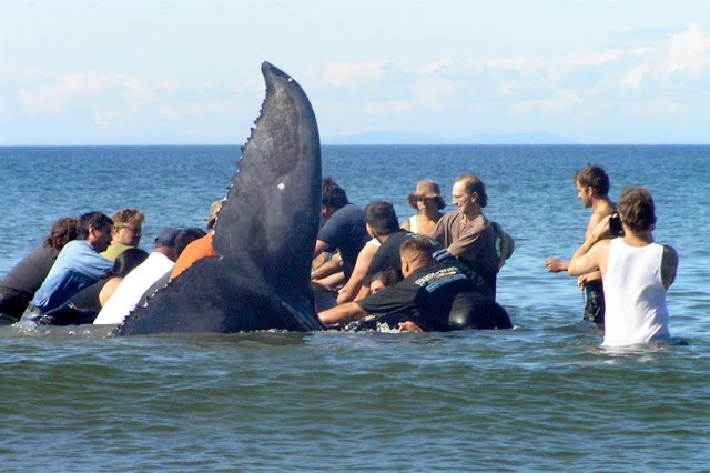 "OBJ Filming On Location, ""Whale Rescue"",  Haida Gwaii, 2007"