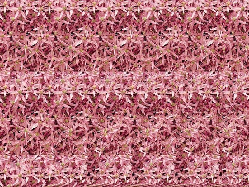 1.bp.blogspot.com/_l23yF58qyP4/TVGbVEltu7I/AAAAAAAAAhA/jSWOaK4CtBY/s1600/stereograms%2B096.jpg