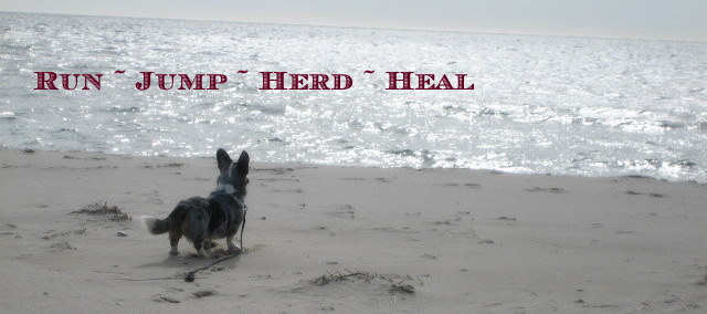 Run - Jump - Herd - Heal