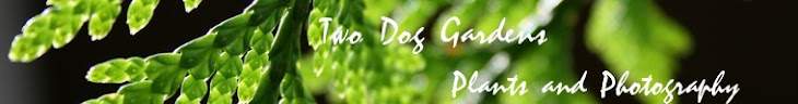 Two Dog Gardens - Photography and Plants
