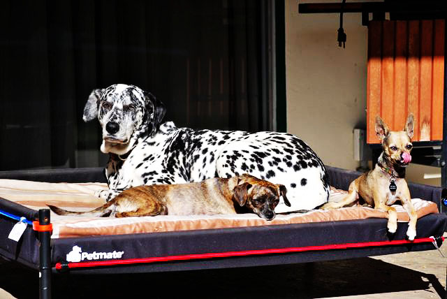 outdoor dog beds product review and research