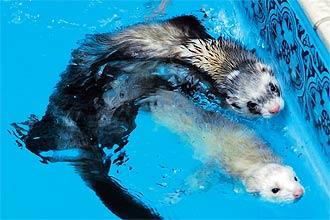Wildvet clinica veterin ria para animais selvagens - Bichos bola en casa ...