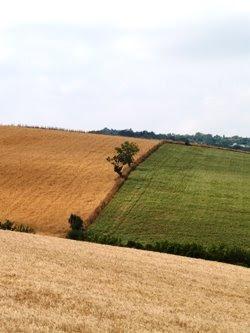 Le colline in giugno biondeggiano di grano. Foto di Andrea Mangoni.
