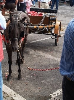 Il cavallino col suo calesse.