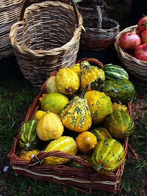 La variopinta panoplia di un cesto di zucche di tante varietà! Foto di Andrea Mangoni.
