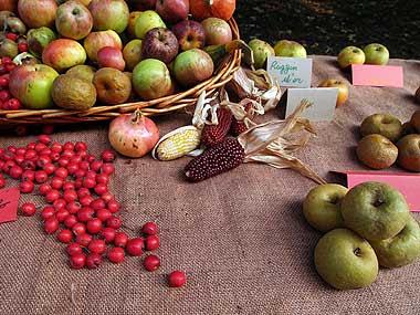 Antiche varietà di frutta e verdura ad una fiera floreale. Foto di Andrea Mangoni.