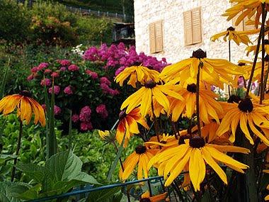 Un cottage garden all'italiana a Cibiana, nel bellunese. Foto di Andrea Mangoni.