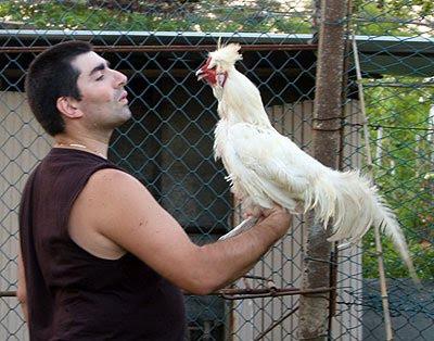 Andrea Mangoni e gallo di Polverara. A voi decidere chi dei due è chi. Foto di Roberta Maieli.