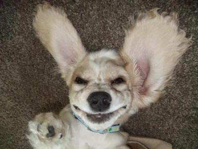 [Image: upside+down+dog.jpg]