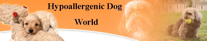 Hypoallergenic Dog World