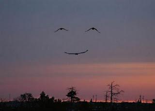 Pareidolia pájaros