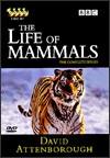 vida mamíferos