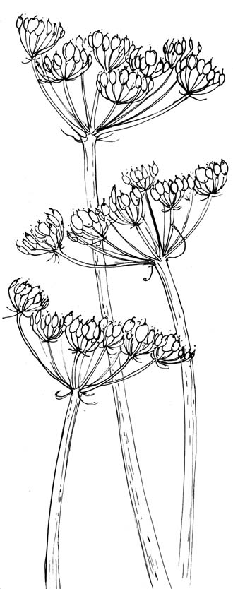 Flower Head Line Drawing : Alison hullyer july