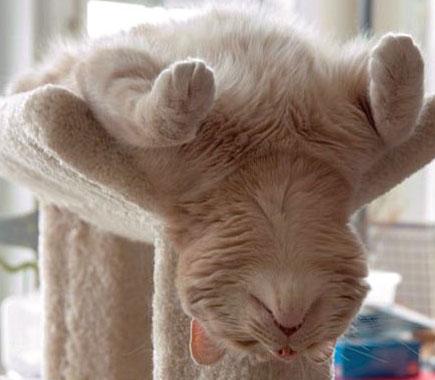Tentang Kucing - Kenapa Tidur Dalam Posisi Melucukan