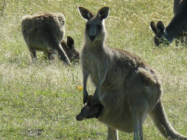 Belajar dari Pengelolaan Alam Lingkungan di Australia